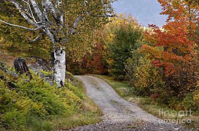 Autumn Road - D005840 Poster by Daniel Dempster