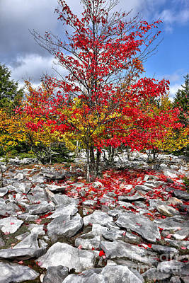 Autumn Trees And Rocks - Fall Colors Poster