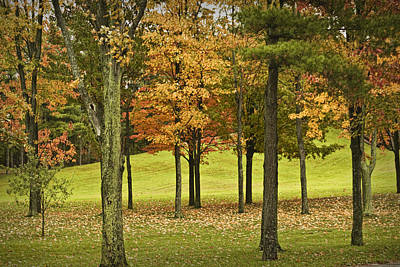 Autumn Trees Near Ithaca Michigan No.4037 Poster by Randall Nyhof