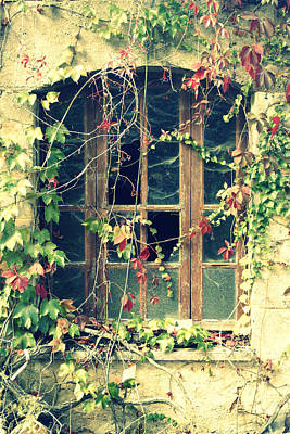 Autumn Vines Across A Window Poster
