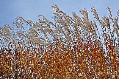 Autumn Wind Through The Grass Poster by Mary Machare