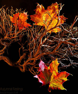 Poster featuring the photograph Autumnal Feelings by Beverly Cash
