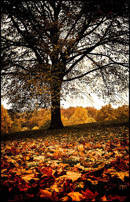 Poster featuring the photograph Autumnal Park by Lenny Carter