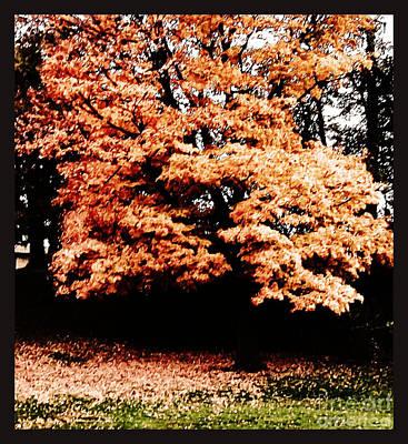 Autumns Tree Poster
