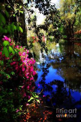 Azaleas In Magnolia Gardens In Charleston Sc Poster