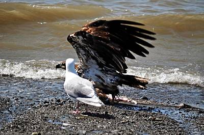 Baby Bald Eagle Movement Poster