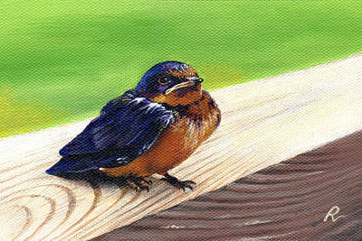 Baby Barn Swallow Poster by Peggy Dreher