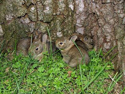 Baby Rabbits Poster