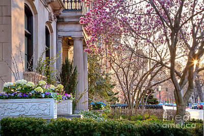 Back Bay Spring Poster by Susan Cole Kelly