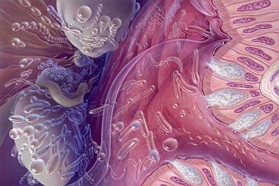 Bacteria Of Human Intestinal Tract Poster