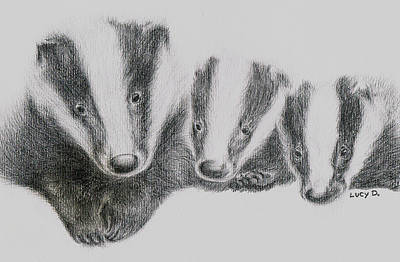 Poster featuring the drawing Badgers by Lucy D