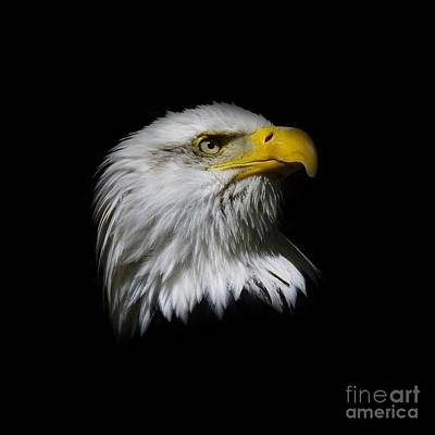 Poster featuring the photograph Bald Eagle by Steve McKinzie