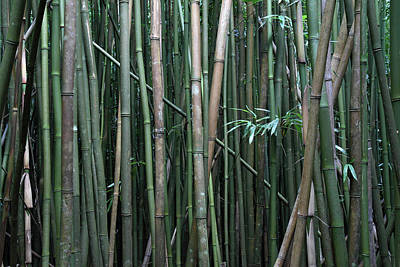 Bamboo Forest Poster by Pierre Leclerc Photography