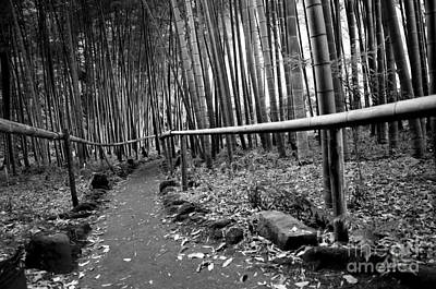 Bamboo Path Poster by Dean Harte
