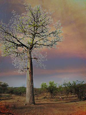 Baobab  Poster by Joseph G Holland
