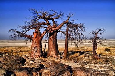 Baobabs At Kubu Poster