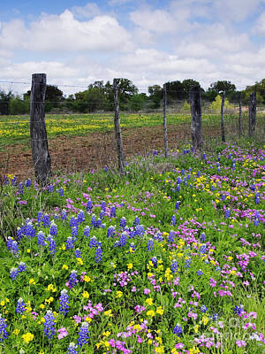 Barbed Wire Fence With Wildflowers In Foreground Poster