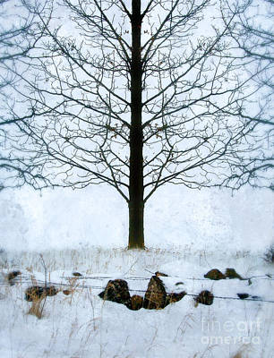 Bare Tree In Winter Poster
