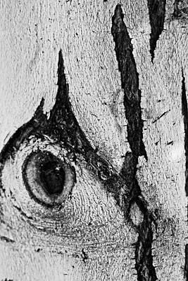 Bark Eye Poster