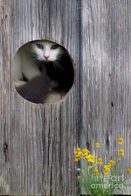 Barn Kitty Poster
