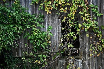 Barn Window Vine Poster