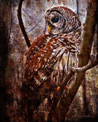 Barred Owl In Hiding Poster by J Larry Walker