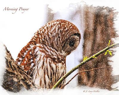 Barred Owl In Morning Prayer Poster