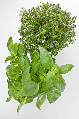 Basil And Thyme Poster by Joana Kruse