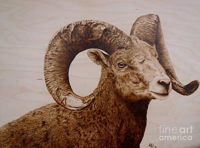 Battle Scarred Big Horn Ram Poster by Adam Owen