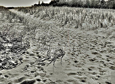 Beach Path Poster by Lin Haring