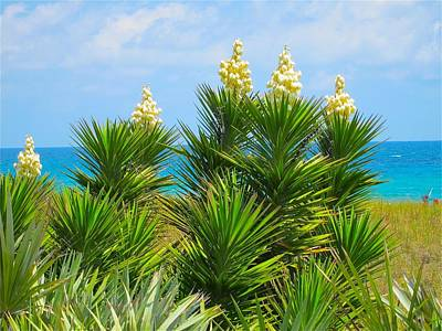 Beach Yucca In Blossom Poster