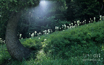 Bear-grass Ridge Poster by Sharon Elliott