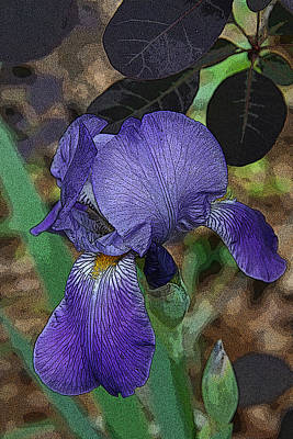 Poster featuring the photograph Bearded Iris by Michael Friedman