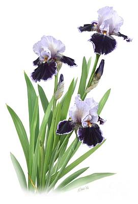 Bearded Iris Trio Poster