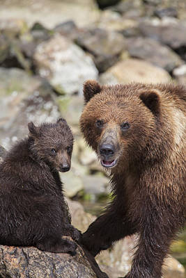Bears At A River Poster
