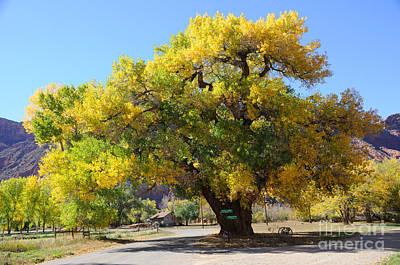 Beautiful Autumn Tree Poster by Gary Whitton