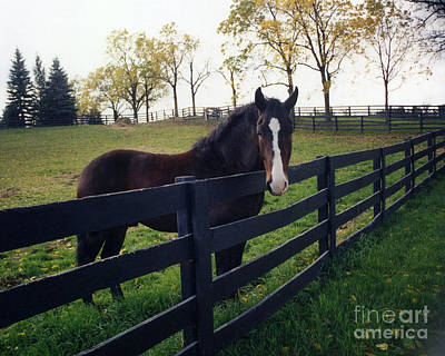 Beautiful Horse In Pasture Nature Landscape Poster