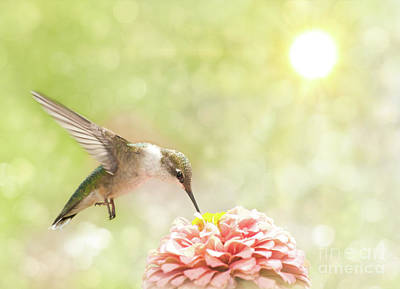 Beautiful Hummingbird Poster