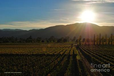 Beauty In The Vineyards Poster