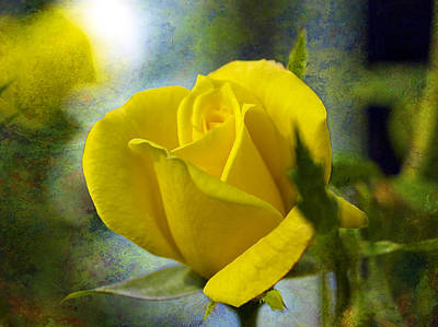 Beauty Of A Yellow Rose Poster by J Larry Walker