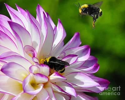 Bees N Blooms Poster by Jack Moskovita