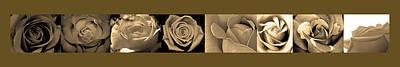 Beige Roses Poster
