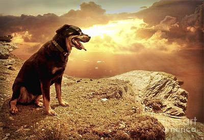 Bella My Rottweiler Poster by Eugene James