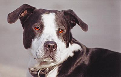Beloved Pet - Portrait Poster by Steve Ohlsen