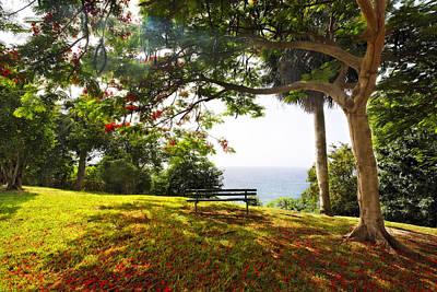 Bench Under A Flamboyan Tree Poster