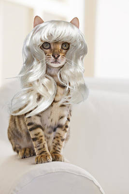Bengal Cat Wearing A Platinum Blonde Wig Poster