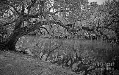 Bent Oak River Reflection Poster by Larry Nieland