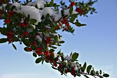 Berries In Snow Poster