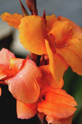 Big Orange Flower Poster