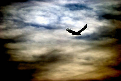 Bird 73 Poster